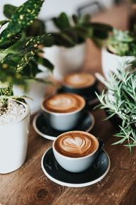 Photo of coffee and plants